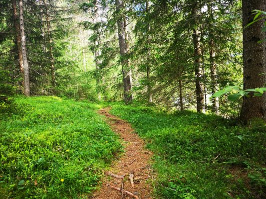 The Perfect Woodland Running Trail  - Connecting With Nature